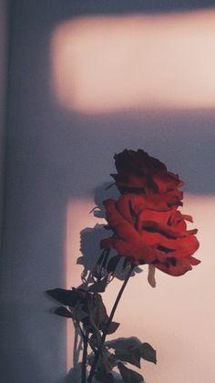 ➬Pp ➬Kp ➬Bio # Rastgele # amreading # books # wattpad Flower Background Wallpaper, Flower Phone Wallpaper, Rose Wallpaper, Cute Wallpaper Backgrounds, Tumblr Wallpaper, Wallpaper Iphone Cute, Pretty Wallpapers, Nature Wallpaper, Aesthetic Pastel Wallpaper
