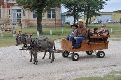 Wagon For Miniature Donkeys Pony Rides Donkey Cart Rides