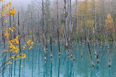 le lac qui change de couleur… Se situe à Biei, à quelques kilomètre du Mont Tokachi, sur l'île japonaise d'Hokkaido. Lorsque l'on découvre pour la première fois les clichés de Kent Shiraishi, on pourrait croire qu'il s'agit de photographies retouchées. Mais il en est rien, c'est en faite l'eau, qui contient un niveau élevé de d'hydroxyde d'aluminium, qui est à l'origine de cette couleur. Une molécule connut pour refléter la lumière bleue.