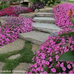 Supertunia Vista® Bubblegum® Petunia outllines this walkway nicely.  A great annual that covers large areas with a mounding habit.