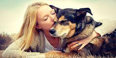 Beneficios Del Aloe Vera Para Nuestras Mascotas