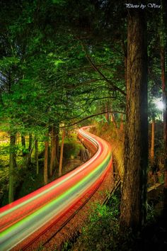 train light trails in forest, Alishan, Chiayi #Taiwan