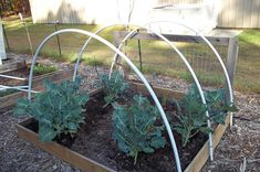 Three hoops complete one hoophouse for crop plantings.