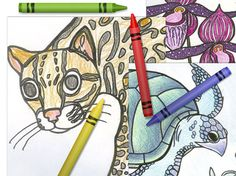 Kid's Corner Review: Great site for all things rain forests and conservation. Rainforest Crafts, Rainforest Activities, Rainforest Birds, Rainforest Theme, Activities For Kids, Amazon Rainforest, Animal Coloring Pages, Colouring Pages, Free Coloring
