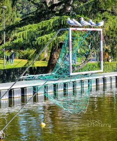 """Gulls Got Game""  #eur #Roma #rome #lago #italy #italia #seagulls #repostromanticitaly #topeuropephoto #noidiroma #photooftheday #instagood #instatravel #myrome #discoverglobe #incredible_italy #lazio #fb ##wp #photobydperry"