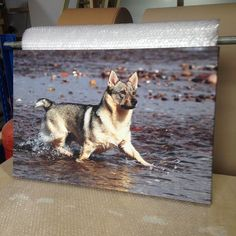 Pets on canvas  Ideal gifts