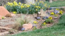 Native Landscaping (Xeriscaping) | Keep Oklahoma Beautiful