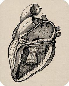 Human Heart Anatomy Digital Image Download For Pillows Clothing Burlap Tea Towels Tote Bags Vintage Dictionary Prints No. 195. $1.00, via Etsy.