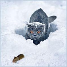 Фотография An animal hunting автор Iliya (djump) Pavlov на 500px