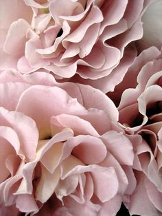 Mauve Open garden spray roses will be used in the centerpieces for texture