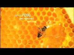 Petition to ban the use of neonicotinoid pesticides before they devastate bee populations in the USA