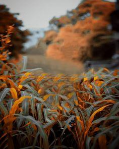 Blur Image Background, Background Wallpaper For Photoshop, Desktop Background Pictures, Blur Background Photography, Photo Background Editor, Photo Background Images Hd, Editing Background, Picsart Background, Best Hd Background