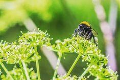 #bij #beestjes #honey #bee #naturephotography #animalphotography #bees #animalfoto  #mechelen