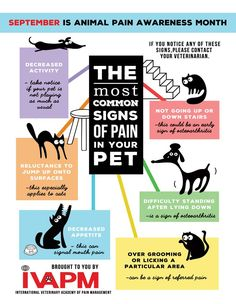 September is Animal Pain Awareness Month | IVAPM (International Veterinary Academy of Pain Management)