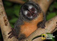 Lawrance Wahba e Palo Jr. revelam as criaturas mais curiosas em Brasil. Brasil Secreto, Pantanal.  #NatGeo Confira conteúdo exclusivo no www.foxplay.com