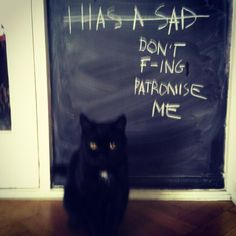 Intelligent Cat.