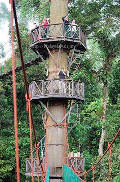 Canopy Walk at Danum Valley Sabah ~ Malaysia Asia