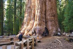 """""""Largest living organism in the world"""""""