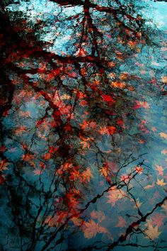 Fall leaves on water photo