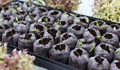 como-fazer-uma-horta-organica-em-casa-2