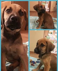 Meet George! This little pumpkin came to us from a rural Kentucky farm and is currently being fostered in a family home. Our best guess is that he's a hound mix and a handsome one at that! He's learning what being a part of a busy household is like especially since he gets to socialize with children ranging in age from 3 to 14! So much activity! He's very sweet and is busy himself being a typical youngster. As with all puppies continued training and socialization is key to having a balanced…