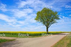 Spring tree and blue sky royalty-free stock photo Spring Landscape, Spring Tree, Sky Photos, Green Grass, Royalty Free Stock Photos, Country Roads, Garden, Room, Blue