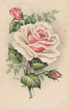 Vintage printable Vintage Images: Vintage roses postcards ~ Peace rose, the kind growing by my grand Flower Images, Flower Pictures, Flower Art, Botanical Illustration, Botanical Prints, Vintage Postcards, Vintage Images, Molduras Vintage, Vintage Rosen