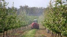 Stropiri de primăvară în livadă: Ce produse Bayer se pot folosi pentru protecția fitosanitară a pomilor fructiferi Country Roads, Plant, Life