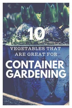 Easy Container Gardening | get tips here on how to start a container garden and common problems to be aware of. #containergardening #beginnergardener#gardening #backyardgardening