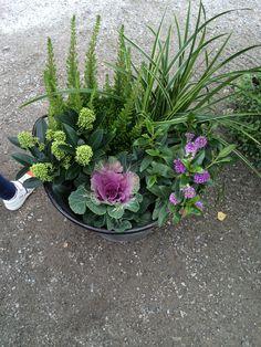 Höstplantering Plants, Pot, Home And Garden, Landscape, Tropical Garden, Ornamental Cabbage, Winter Garden, Garden