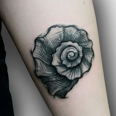#shell #seashell #tattoos #tattoo #sketche #koltowska #molokotattoostudio