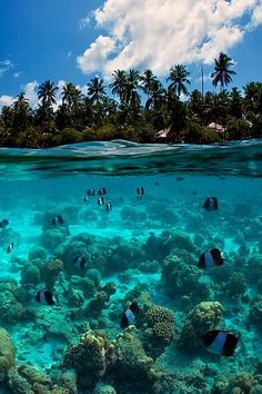 Exploring nature's beauty in this luxury travel destination. Scuba diving and snorkelling on a stunning reef with fish and coral - bliss! holiday destinations the maldives Fish world. Places Around The World, The Places Youll Go, Places To See, Beautiful Places In The World, Dream Vacations, Vacation Spots, Jamaica Vacation, Vacation Ideas, Romantic Vacations