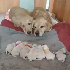 Dogs Family Cute baby dogs and puppies. So adorable.Cute baby dogs and puppies. So adorable. Cute Funny Animals, Cute Baby Animals, Funny Cute, Funny Dogs, Animals And Pets, Cute Cats, Funny Puppies, Smiling Animals, Smiling Dogs