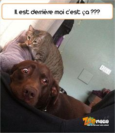 #chat #chien #humour #picoftheday #dog #cat #animalerie #zoomalia
