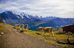 Switzerland / Faulhorn | Flickr - Photo Sharing!