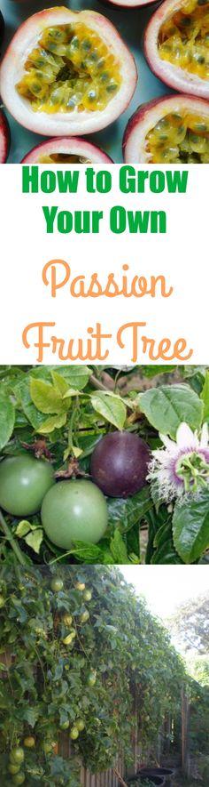 grow passion fruit