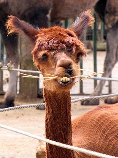Ugliest Animal Ever?! lol by johnmuk, via Flickr
