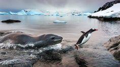Naturfotografie: Karate-Vögel und Disko-Tintenfische, preisgekrönt