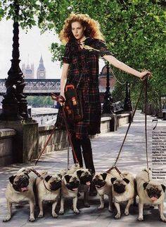 fashion pugs ---- OMG!!!! I'd be in heaven!!!