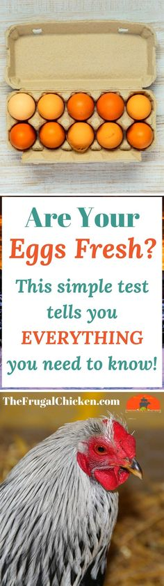Not sure if your eggs are fresh? Here's a simple test you can do in your kitchen to know for sure!