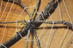 Use Sticks and Embroidery Floss to Make a Spiderweb!: Weave Your Own Spiderweb!