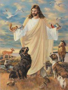 Animals And Pets, Cute Animals, Happy Animals, Animals Beautiful, Pet Loss Grief, Image Jesus, Jesus Pictures, Heaven Pictures, Beautiful Pictures