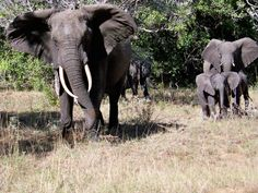 """The team at the Maputo Elephant Game Reserve say """"come on over for a visit, ya hear!"""""""