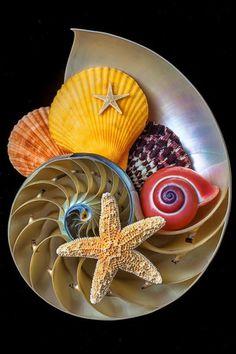 Decoración hecha con caracoles, conchas y estrallas de mar