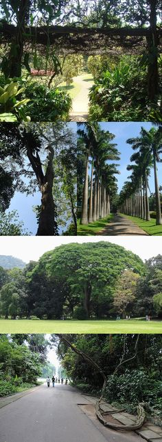 Images of the Royal Botanical Garden of Peradeniya, Sri Lanka (www.secretlanka.com)