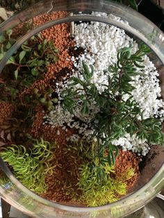 Miniature Terrarium Fairy Gardens Start Segmenting The Garden Into Colour  Zones Using Pebbles