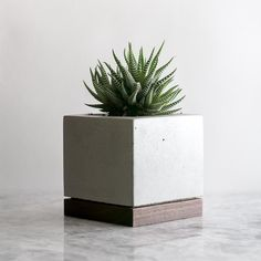 Every space needs something alive and green. The bold form of the Concrete + Wood Planter frames the unpredictable shapes that arise in nature. Made with succulents in mind, this planter is best suited for small plants that do not need much wateri. Wood Concrete, Diy Concrete Planters, Cement Planters, Concrete Furniture, Diy Planters, Planter Garden, Polished Concrete, Cement Design, Beton Design
