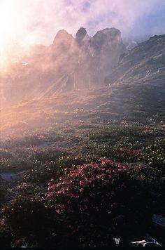Sunrise over flowered fields