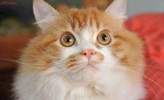 Gatos precisam de cuidados específicos do tutor