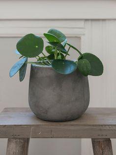 De 15 mest trendy grønne plantene i 2019 Pilea Peperomiodes, Nordic Living, Marianne, Hygge, Interior Inspiration, Planter Pots, Photography, Home Decor, Room